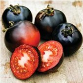 Indigo Rose Tomato TM784-10