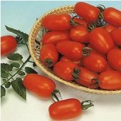 Juliet Tomato TM71-20_Base