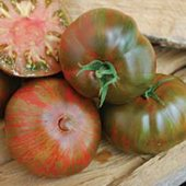 Large Barred Boar Tomato TM821-10