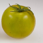 Lime Green Salad Tomato TM717-20_Base