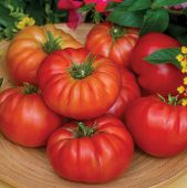 Madame Marmande Tomato TM903-10_Base
