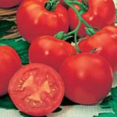 Marglobe F Tomato TM75-10_Base