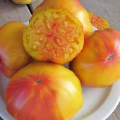 Marizol Gold Tomato TM720-20_Base