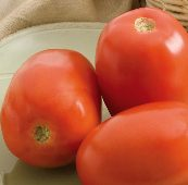 Monticello Tomato TM894-10_Base