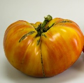 Mortgage Lifter Tomato (Bi-color Strain) TM725-10_Base