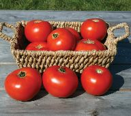 Mountain Fresh Plus Tomato TM84-20_Base