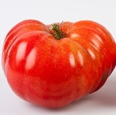Neves Azorean Red Tomato TM685-10