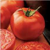 New Yorker Tomato TM353-20_Base