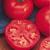 Northern Exposure Tomato TM93-10