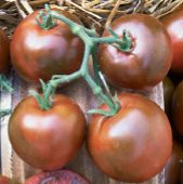 Nyagous Tomato TM408-20_Base