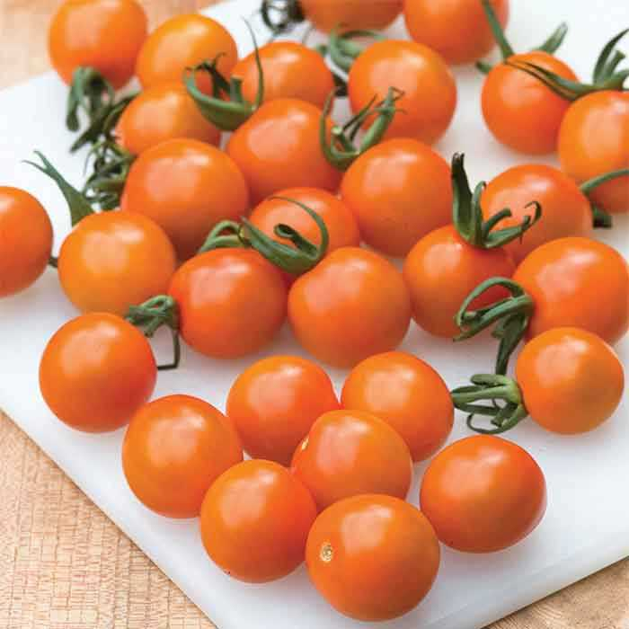Orange Paruche Tomato TM755-10_Base