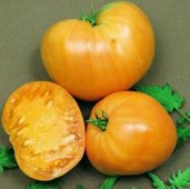 Orange Oxheart Tomato TM97-20_Base