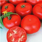 Pik Red Tomato TM521-10_Base
