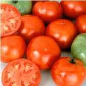 Pik Rite Tomato TM746-20_Base