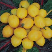 Plum Lemon Tomato TM302-10_Base