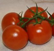 Prairie Fire Tomato TM627-10_Base