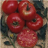 Pruden's Purple Tomato TM112-20_Base