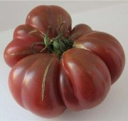 Purple Calabash Tomato TM331-10_Base