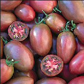 Purple Russian Tomato TM304-10_Base