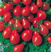 Pear Tomato (Red) TM104-20