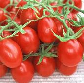 Plum Tomato (Red) TM444-20_Base