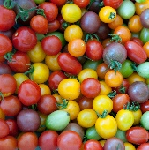 Rainbow Cherry Mix Tomato TM553-20_Base