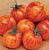 Red Zebra Tomato TM548-20