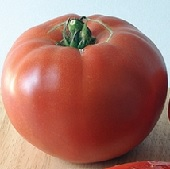 Red Rose Tomato TM827-10_Base
