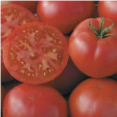 Redfield Beauty Tomato TM577-10