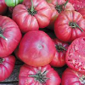 Rose Tomato TM164-10_Base