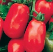 Rossol Tomato TM427-20_Base