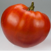 Rostova Tomato TM703-10_Base