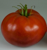 Royesta Tomato TM633-10_Base