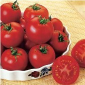 Russian Red Tomato TM117-10_Base