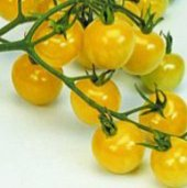Snowberry Tomato TM289-20_Base
