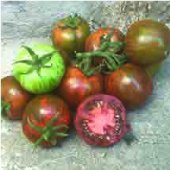 Spike Tomato TM842-20_Base
