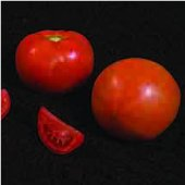 Summer Pick Tomato TM849-10_Base