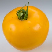 Sunny Goliath Tomato TM291-20_Base