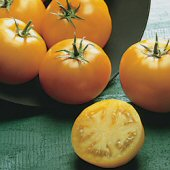 Sunray Tomato TM447-20_Base