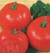 Super Beefsteak Tomato TM129-20_Base