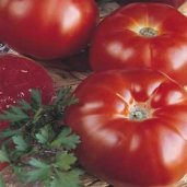 Super Marmande Tomato TM262-20_Base