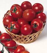 Sweet Chelsea Tomato TM133-20_Base