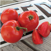 Tasti Lee Tomato TM760-10_Base
