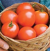 Tomosa Tomato TM529-10_Base