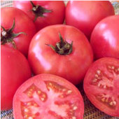 Trucker's Favorite Pink Tomato TM509-20_Base