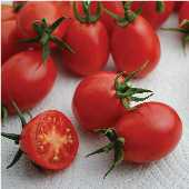 Umberto Pear Tomato TM776-20_Base