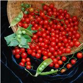 Wild Cherry Tomato TM649-10_Base