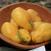 Yellow Bell Tomato TM729-10