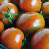 Zebra Cherry Tomato TM574-10_Base