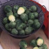 Long Island Improved Brussels Sprouts BS3-50_Base